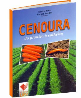 Cenoura do plantio à colheita